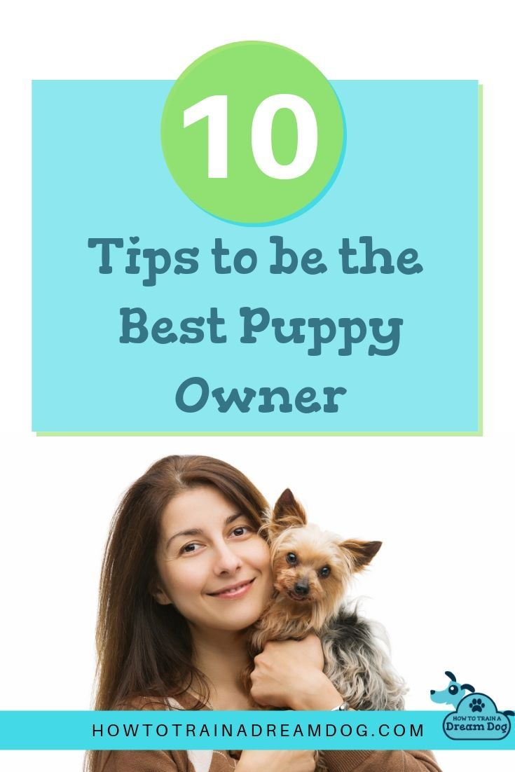 10 Tips To Be The Best Puppy Owner Best Puppies Dog Training