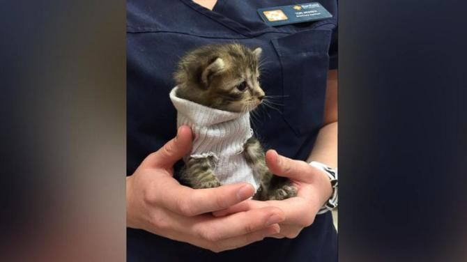 Tiny Kitten Rescued From Hurricane Matthew Wears Tube Sock Sweater