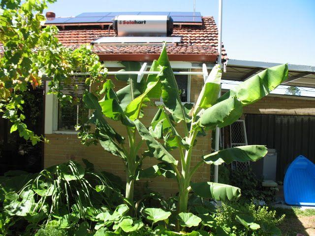 Layanan service solahart di sunter jakarta utara CV.SURYA MANDIRI TEKNIK siap melayani service maintenance berkala untuk alat pemanas air Solar Water Heater (SOLAHART-HANDAL) anda. Layanan jasa service solahart,handal,wika swh.edward,untuk jasa service yang aman dan nyaman serta bergaransi Info Hubungi Kami Segera. Jl.Radin Inten II No.53 Duren Sawit Jakarta 13440 Tlp : 021-98451163 Fax : 021-50256412 Hot Line 24 H : 082213331122 / 0818201336 Website : www.servicesolahart.co