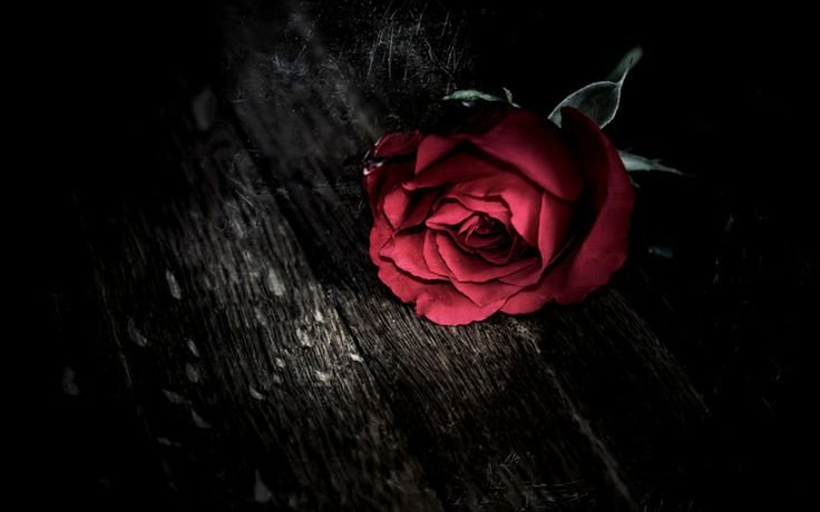 #rose #darkness #life