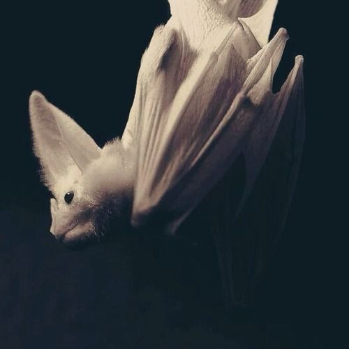 Haunted Places In Ipswich Qld: 173 Best Images About BAT SHIT CRAZY.. On Pinterest