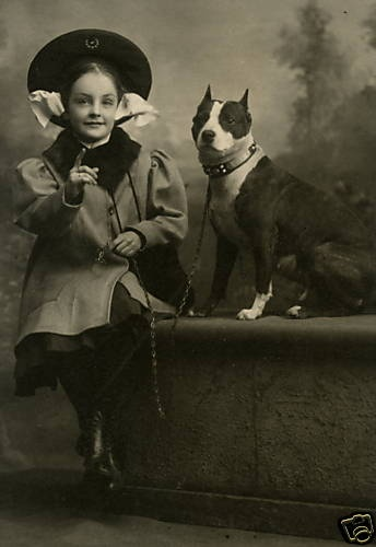 """Old photos of the """"Nanny Dog"""" – Staffordshire Bull Terrier « A Doggie Bloggie"""