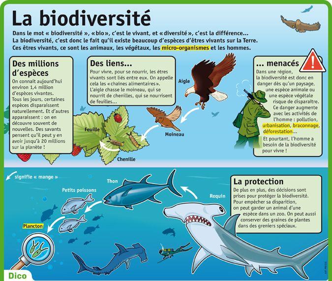 Fiche exposés : La biodiversité
