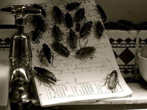 Las cucarachas son realmente un problema higiénico en muchos hogares pero afortunadamente es posible elaborar venenos o sustancias que las espanten sin tener qu