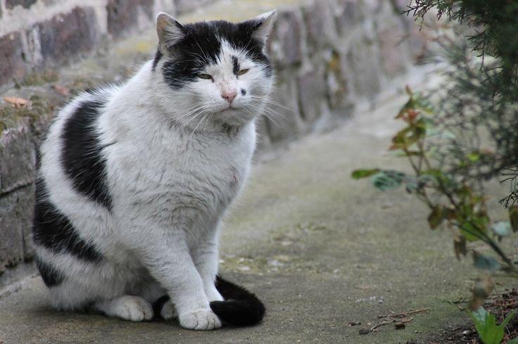 Gatos mais velhos podem ter convulsões provocadas por ruídos