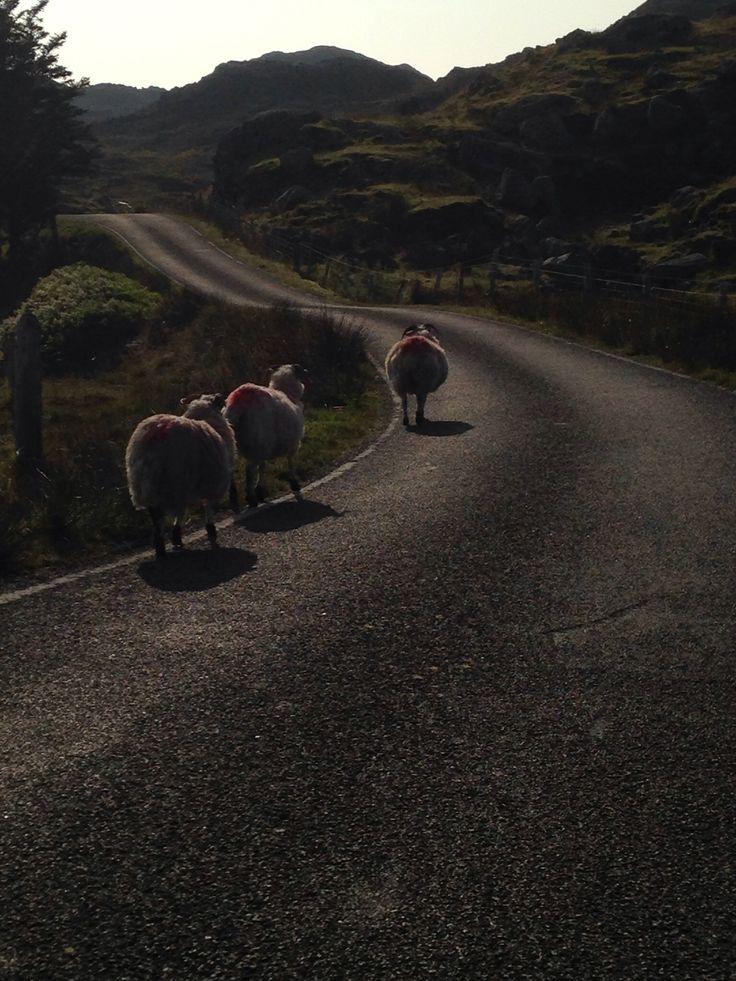 Long way home Harris, Scotland