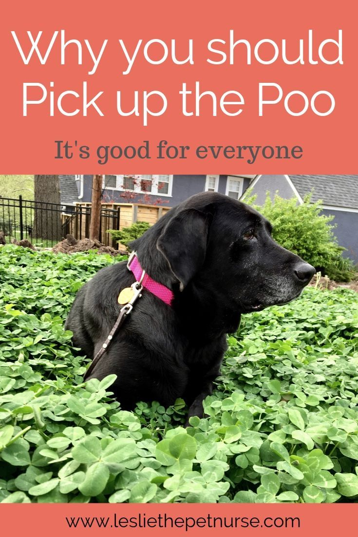 Picking Up The Poo Pets Pet Parent Pet Wellness