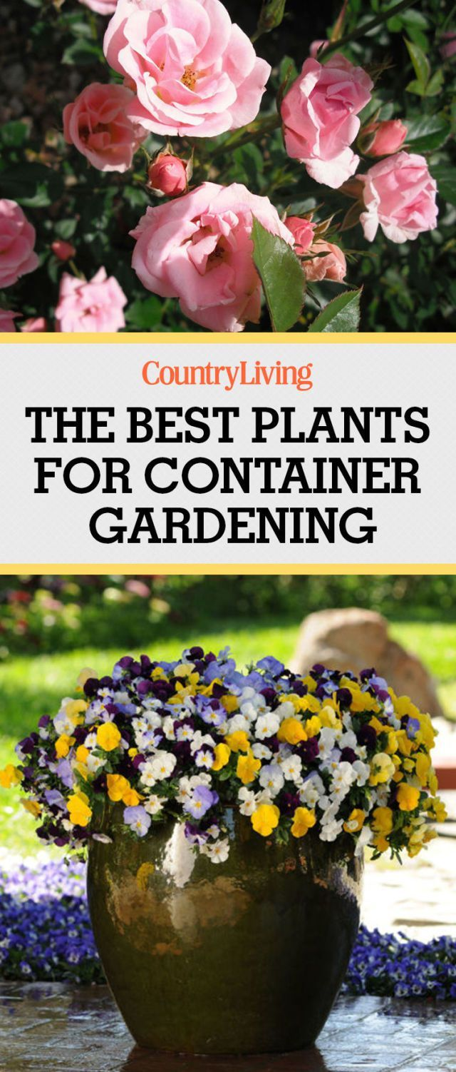 10 Best Plants for Container Gardening