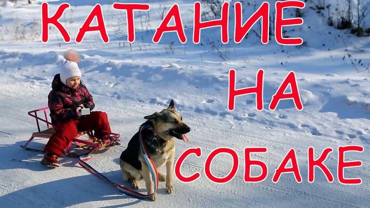 Катаемся на собаке!!! Что-то пошло не так...Зимние развлечения!!! Ride o...