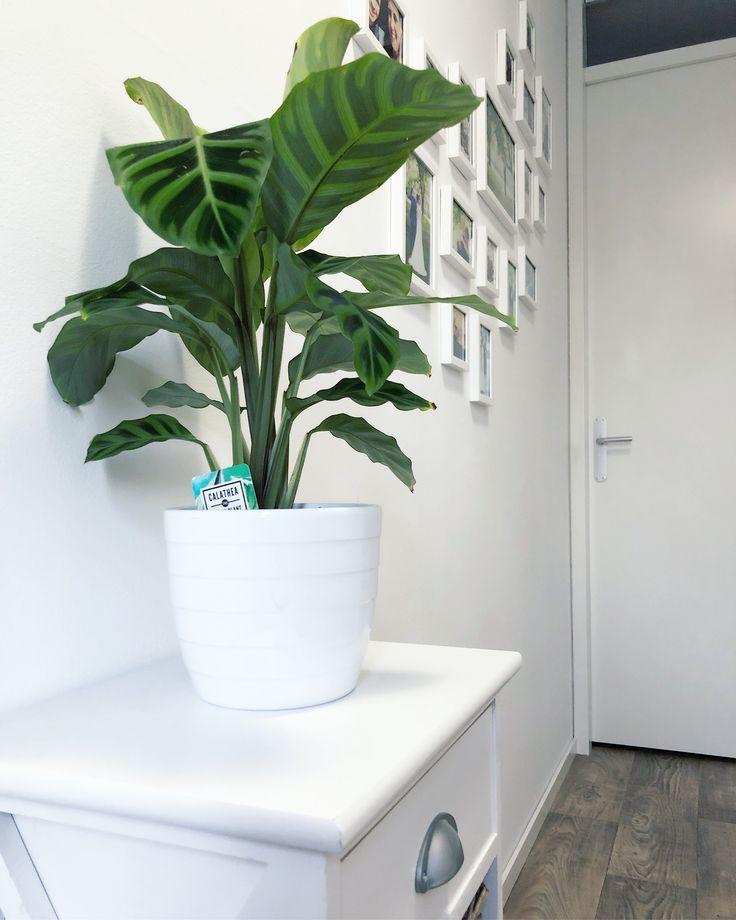 h a l l w a y | we willen dat je bij binnenkomst direct in de 'spotllights' staat (automatische verlichting mbv Philips Hue), maar ook het natuurlijke gevoel. Naast het ophangen van je jas kun je dus ook al onze mooiste herinneringen aam de muur zien hangen. 😍 #hallway #hallwaydecor #white #simpeldesign #home #homedecor #homeandliving #sidetable #plant #memories #pictures #robust #vtwonenbijmijthuis #binnenkijken #industrieelwonen #industrialdesign #xenos #philipshue #leenbakker #calathea