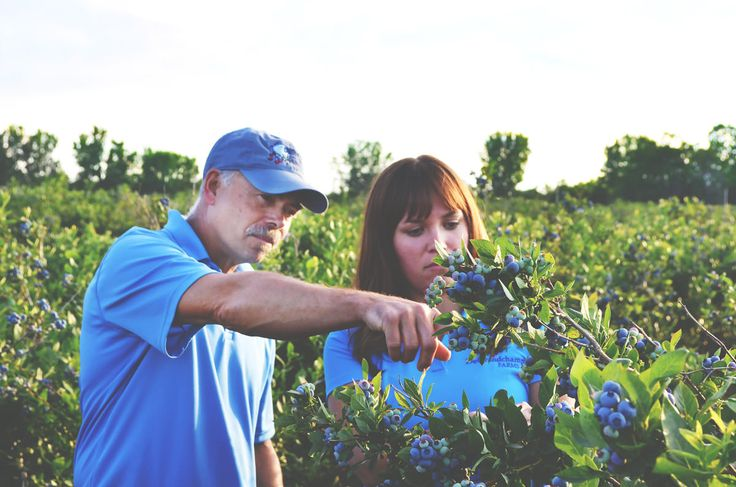 DeGrandchamps is a blueberry and cranberry farms located in South Haven, Michigan. U pick and tours.  July and August