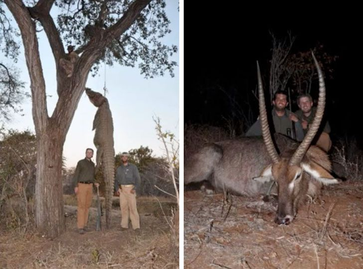 Real estate mogul Donald Trump's sons, Donald Trump Jr. and Eric Trump, have come under fire after some gruesome photos showing them posing with a dead leopard and holding a severed elephant tail were released online (see them all here). The photos were taken during a hunting trip in Zimbabwe and originally posted on the Hunting Legends website. They were quickly denounced by PETA and other animal rights and conservation groups.