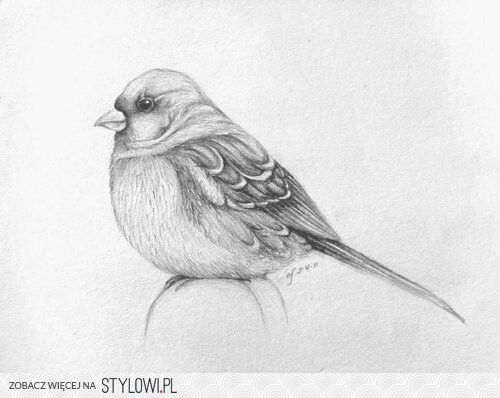 Rysunek Ołówkiem Rysowanie Ptaków In 2019 Pinterest Drawings