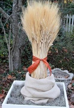 Wheat grass bundle