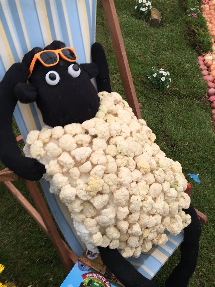Devon County Show... sheep! May 2017. #cauliflower