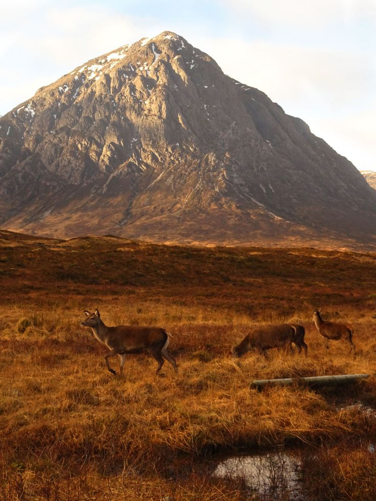 Tutorial 3. Using Photoshop I was able to edit this photo making the mountain in the background shaper while still defining the deer in the foreground. I would of like to bring out the sky a little more but because there was so much yellow in the foreground I couldn't find away for it to work.  Own Image, Scotland Highland 2017