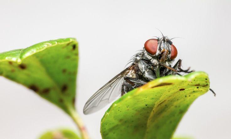3 trucos caseros para acabar con las moscas
