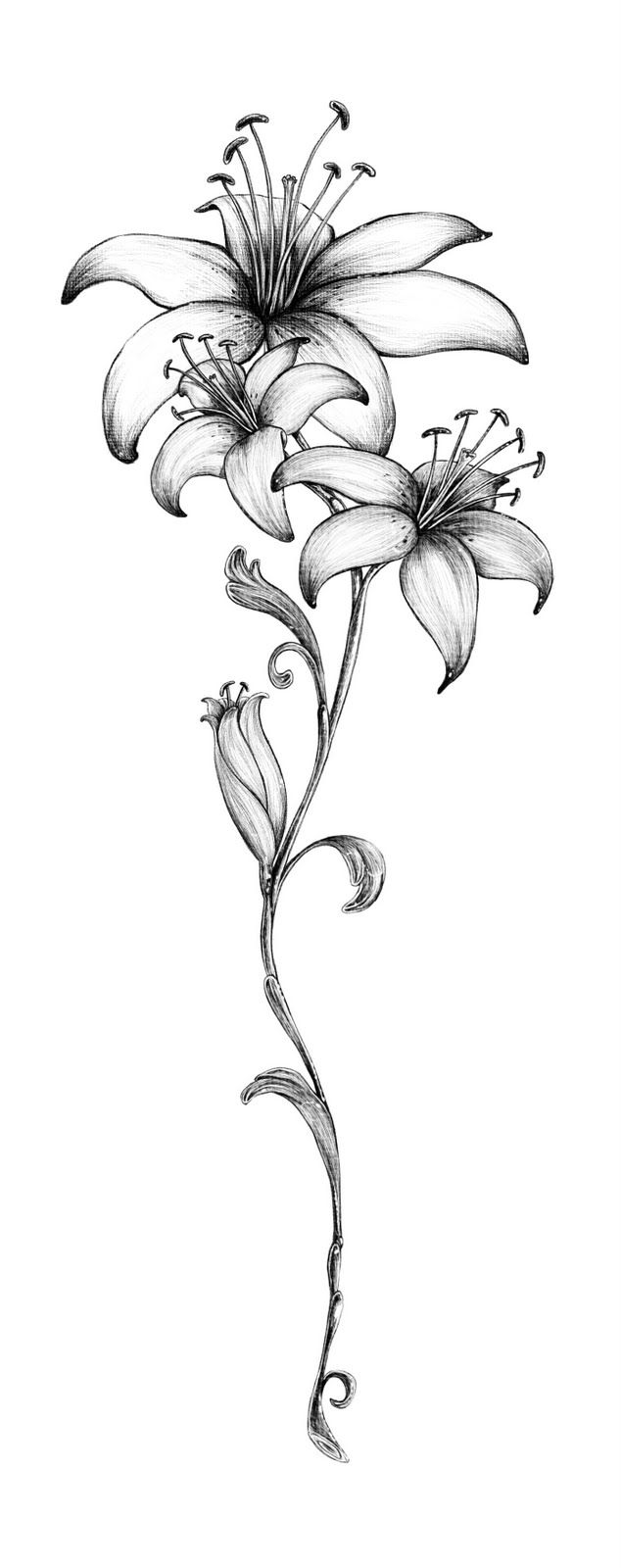 Lily Tattoo; I'm gong to get this in the center of my chest.                                                                                                                                                                                 More