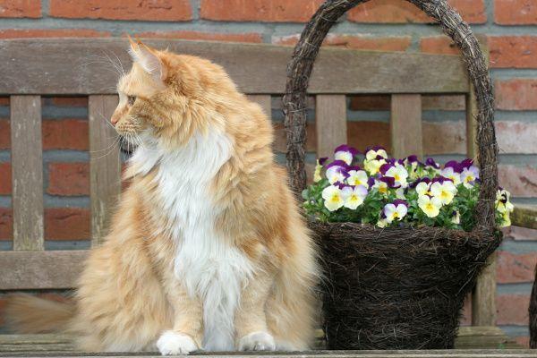 Pielęgnacja futra u kotów:  http://www.obcasy.pl/pielegnacja_futra_u_kotow.html