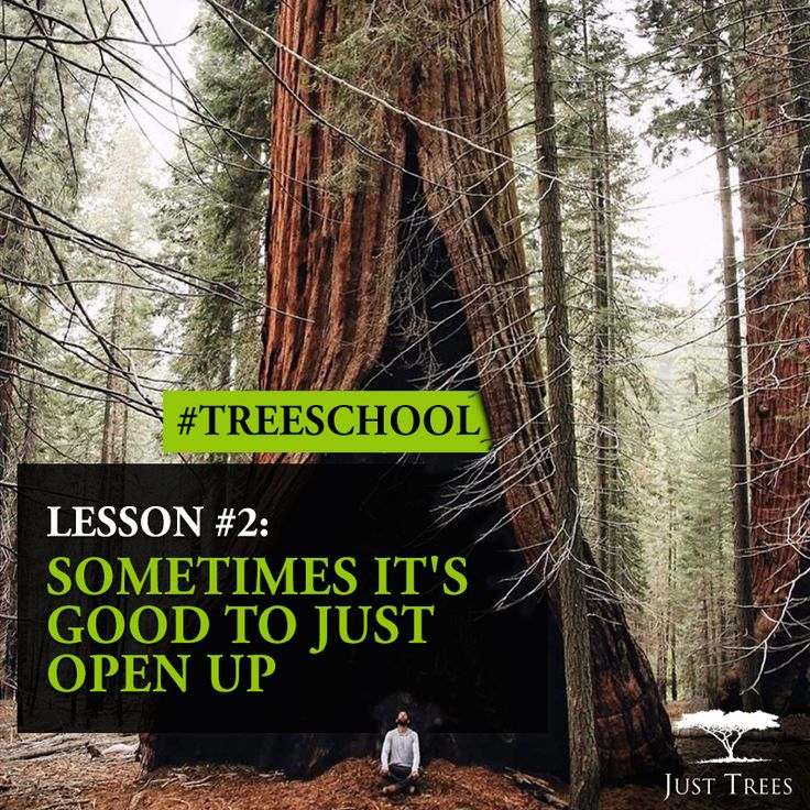 Lesson 2: Sometimes it's good just open up #TreeSchool