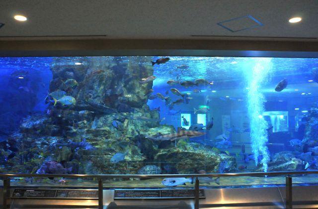 宮津市にある水族館 丹後魚っ知館 は子連れファミリーがゆるく楽しめるよ 水族館 魚 アシカ