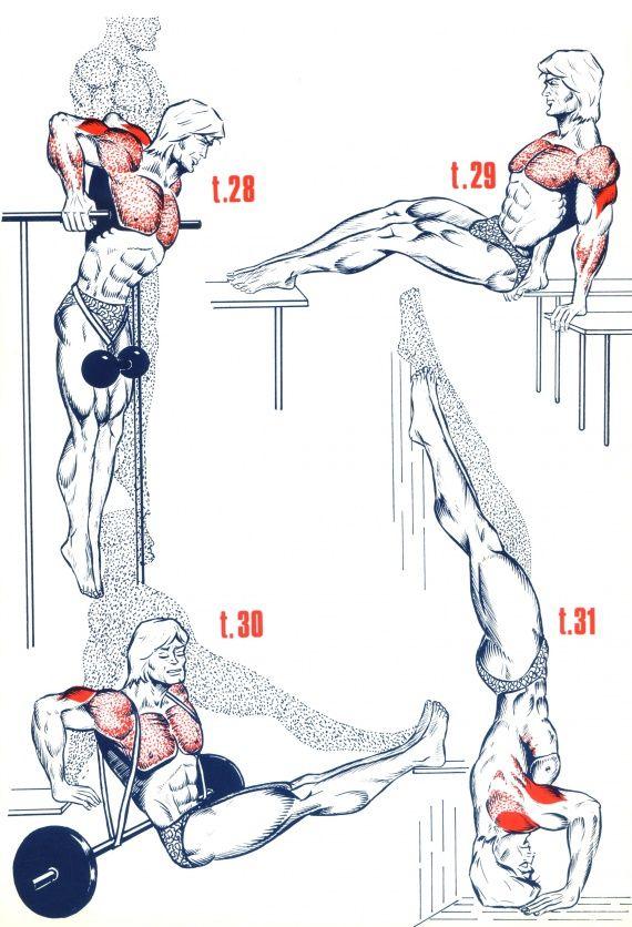 Triceps6                                                       …