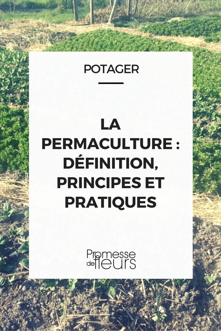 Connaissez-vous la permaculture ? Découvrez ce dont il s\'agit, les principes et les pratiques à mettre en oeuvre au potager