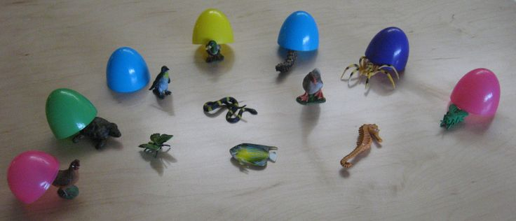 animals that lay eggs - photo #10