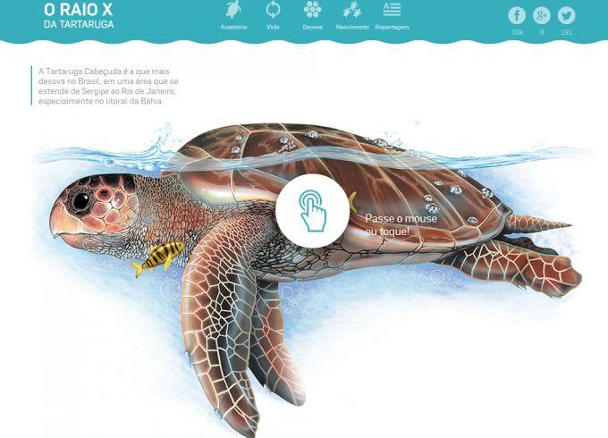 Captura de tela parcial do infográfico interativo O Raio X da Tartaruga Cabeçuda