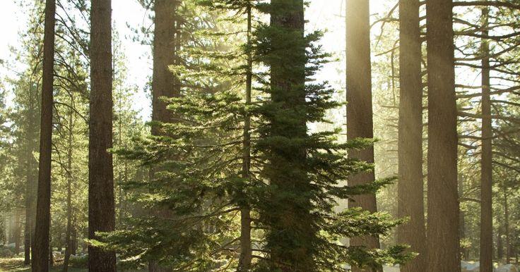 Como descobrir quantos metros cúbicos tem o tronco de uma árvore. A madeira é usada para a construção de casas e outras edificações. A quantidade de madeira obtida de uma árvore é determinada pelo cálculo do número de metros cúbicos, ou seja, o volume que ela possui. Isso é feito tirando-se as medidas da árvore que você deseja calcular. Para isso, é preciso encontrar uma árvore ou madeira vertical grande o ...
