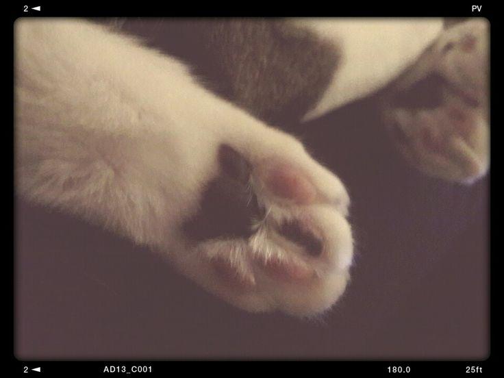 #FANCYPANTS #Kitty #Paw #GRAZIANO