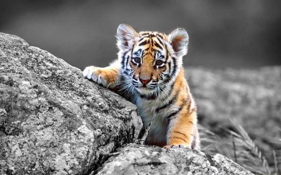 17 Best images about Adorable baby animals on Pinterest ...