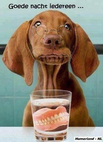 Doggie met kunstgebit..achhh..