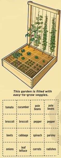 Perfect small vegetable garden layout for my 4x4 raised for Perfect garden layout