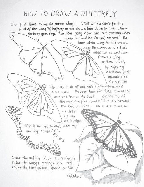How to Draw Worksheets for The Young Artist: How to Draw A Monarch Butterfly Lesson and Workshe...