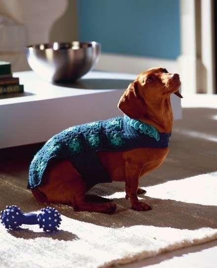 Abrigos de ganchillo para perros: Fotos de ideas - Diseño de abrigo de perros…