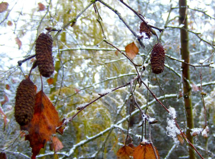 #fall #snow