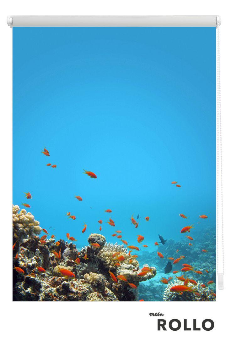 Mein Rollo - das Rollo zum Selbstgestalten. Mach Dein Statement am Fenster und finde auf www.meinrollo.de eine riesengroße Auswahl an coolen Sprüchen, tollen Mustern und  ausgefallene Fotomotive für Dein Rollo! Wir wünschen Dir viel Spaß beim Aussuchen.(Meer, Fische, Sonnenschutz, Unterwasserwelt, Korallenriff, Reisen,Klemmfixrollo)