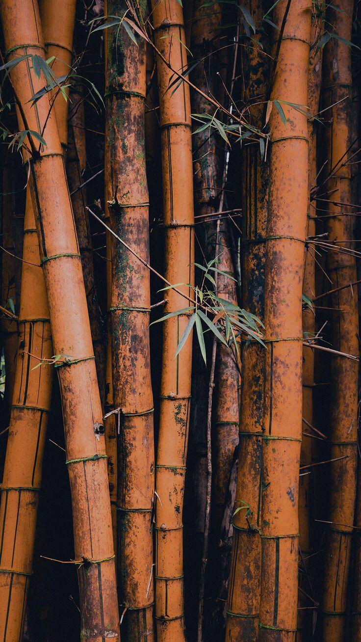 картинки бамбук для телефона есть