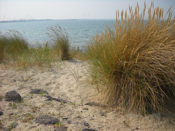 De duinen bij het Banjaardstrand van Kamperland. Op wandelafstand van www.wisske.com