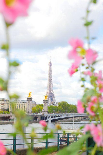 roses trémières à Paris