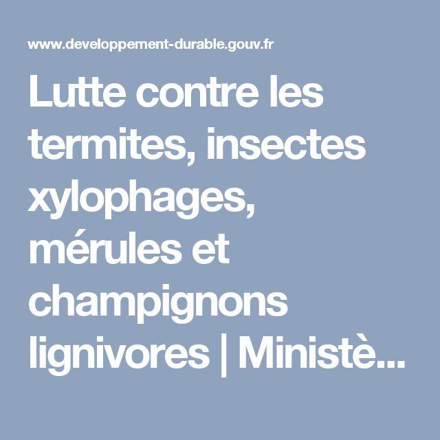Lutte contre les termites, insectes xylophages, mérules et champignons lignivores | Ministère de l'Environnement, de l'Énergie et de la Mer