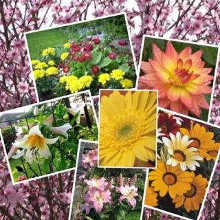 Avevo tredici anni [...] Fu la prima volta che vidi dei fiori, dei veri fiori, come quelli che c'erano in chiesa. Sotto i tigli, dalla parte del cancello c'era il giardino, pieno di zinie, di gigli, di stelline, di dalie -capii che i fiori sono una pianta come la frutta- facevano il fiore invece del frutto e si raccoglievano, servivano alla signora, alle figlie, che [...] quando stavano in casa li aggiustavano nei vasi. LunaFalò/14/Crescere/Scoprire