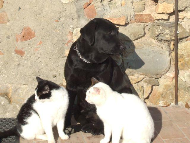 Kaila  the cats