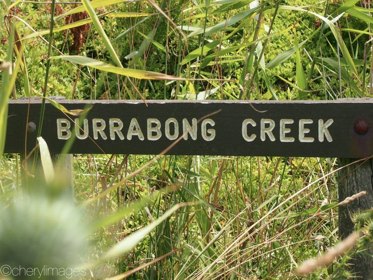 Trekking the Bushrangers Trail in Victoria.  Can you spot the creek?  Cape Schanck National Park, Victoria. - Jan, 2016