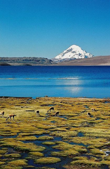 Lake Chungara (Chile) in Lauca National Park, and Volcano Sajama in Bolivia