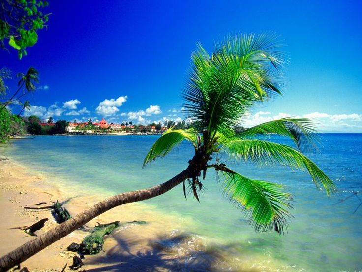 Tobago beach vacations | Caribbean travel inspiration