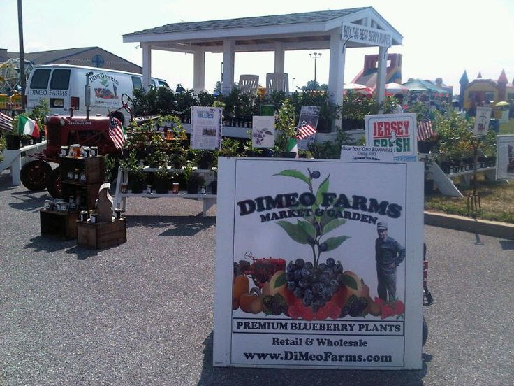 Dimeo Farms Reviews By Hy Customers Like These Who Absolutely Love Our Blueberries Plants Nursery At Family Blueberry Farm In New Jersey