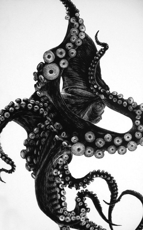 """""""Octopus"""" by Tierra Connor // The Octopus is a cephalopod mollusc of the order Octopoda.  // Silhouette painted with india ink onto a clay scratchboard. Detail added using an xacto knife. // http://cargocollective.com/tierraconnor/Octopus: Drawings, The Artists, Illustrations, Crack, Dark Side, Octopuses, Design Tattoo, Pens, Ink"""