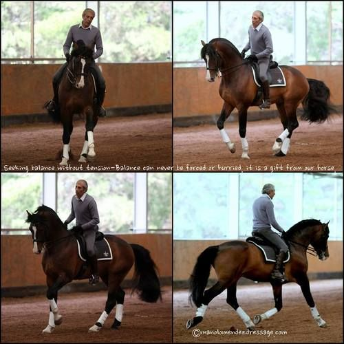On balance and collection… Manolo says they cannot be hurried, forced or taken. Both comes from within the horse. They are born not just from developing the horse's body, his straightness, strength and suppleness but from tending to his mind and heart and carefully cultivating his desire to work with the rider.